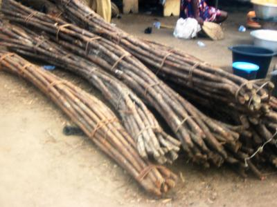 Harvested rattan for processing